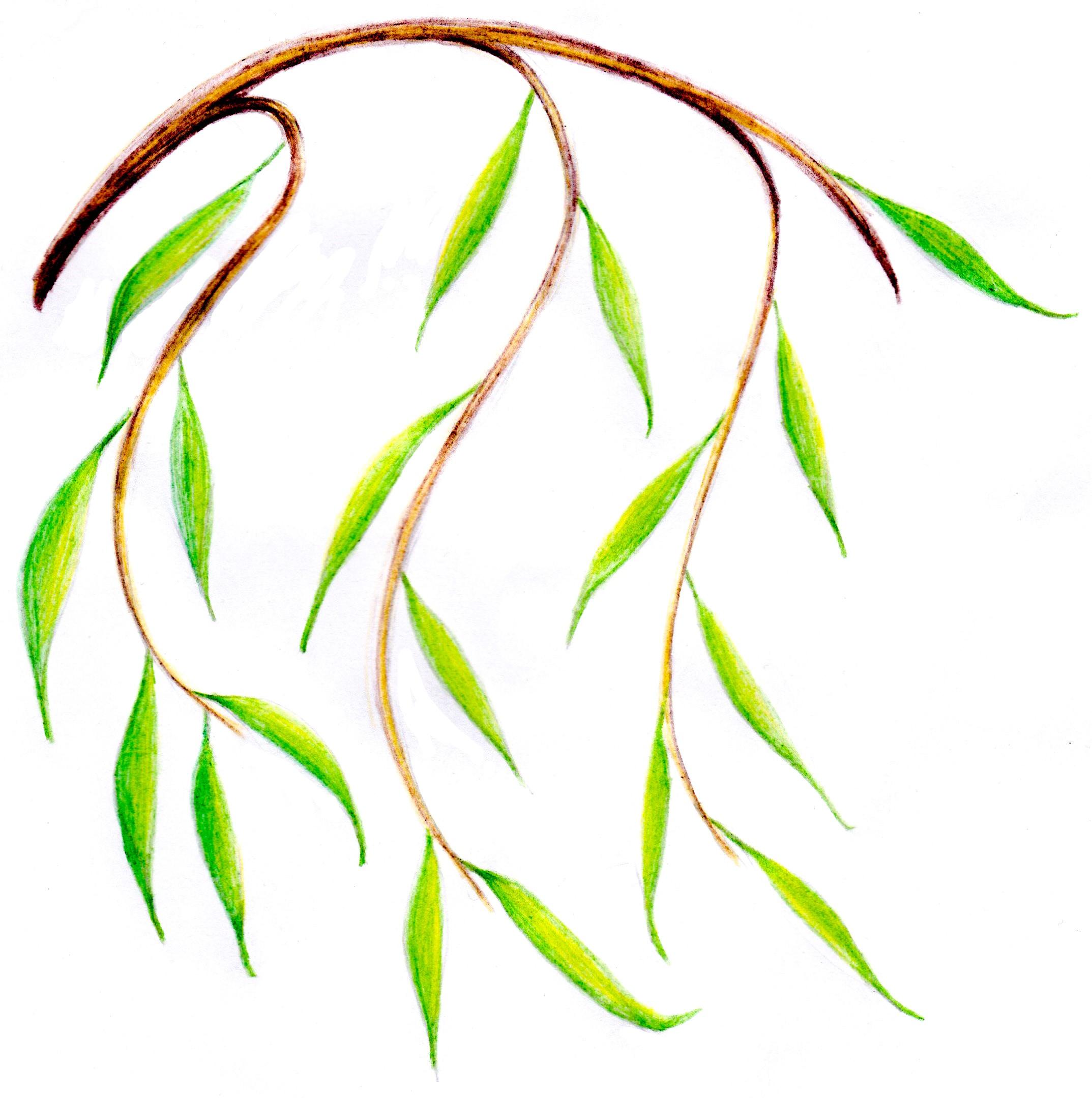 Salix Counselling